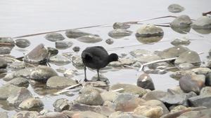 野鳥観察会(千駄堀)