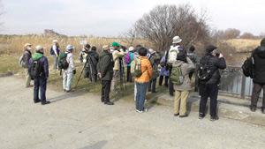 野鳥観察会(江戸川ふれあい松戸川)