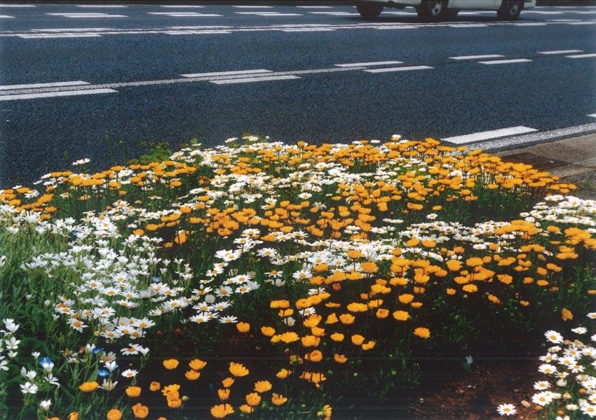 前田花の会