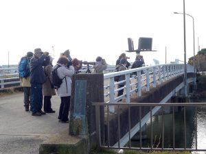 平成28年度第2回野鳥観察会