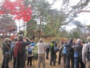 平成28年度第3回野鳥観察会開催のお知らせ