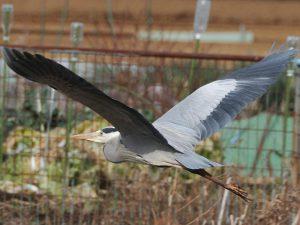 平成29年度第4回野鳥観察会開催