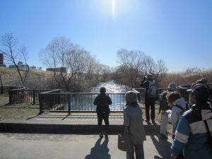 江戸川野鳥観察会