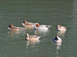 平成28年度第5回野鳥観察会開催結果について