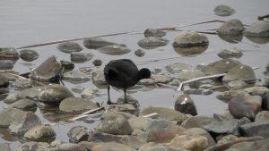 平成28年度第6回野鳥観察会開催