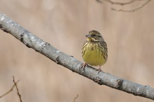 平成28年度第6回野鳥観察会開催結果