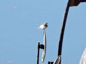 平成29年度第2回野鳥観察会開催結果
