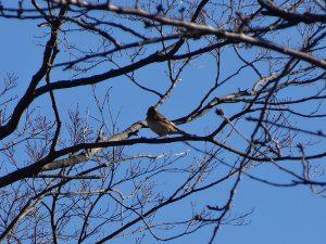 昨年の野鳥観察会の様子