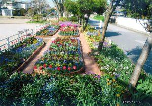 松戸市議会議長賞:二十世紀が丘町会 花づくり部