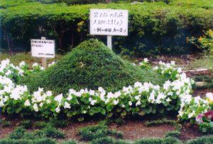 松戸市造園業協会長賞:朝の体操友の会