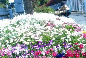 公益財団法人松戸みどりと花の基金理事長賞:前田花の会