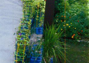 グリーン賞:松戸市立貝の花小学校
