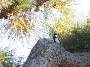 八柱霊園野鳥観察