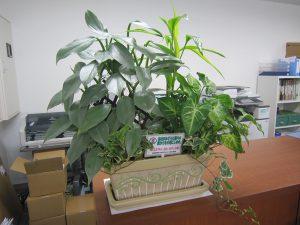 工場・事業所等に対する緑化奨励