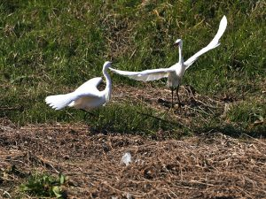 国分川野鳥観察会