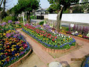松戸市長賞:二十世紀が丘町会花づくり部