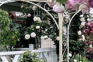 公益財団法人松戸みどりと花の基金理事長賞:上田 しのぶ