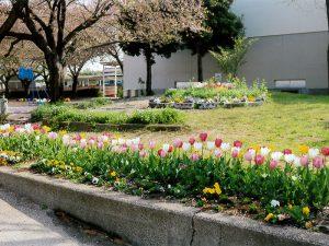 グリーン賞:松戸市立松飛台第二小学校