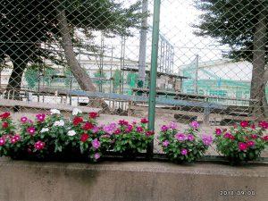 公益財団法人松戸みどりと花の基金理事長賞:松戸市立常盤平中学校