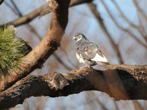 平成30年度第3回野鳥観察会