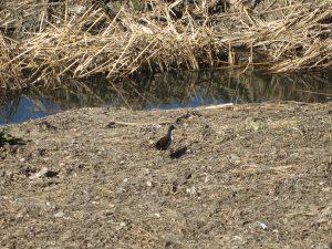 平成30年度第4回野鳥観察会