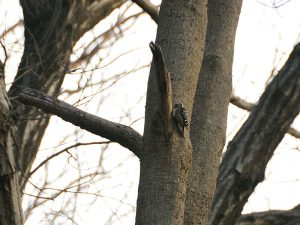 第5回野鳥観察会開催結果