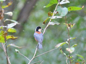 令和元年度第1回野鳥観察会
