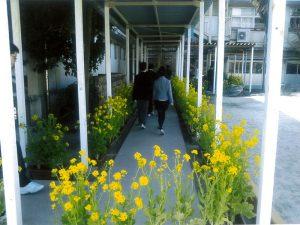 松戸市立小金小学校