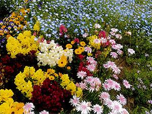 一期花の会