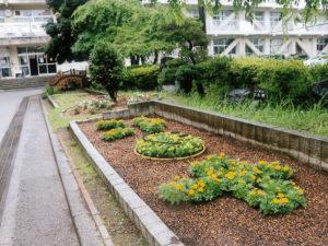 松戸市立第六中学校園芸部